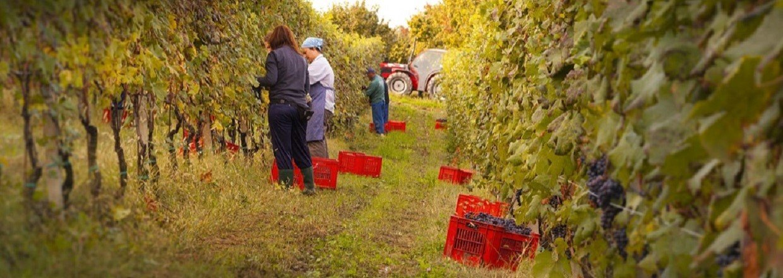 Vinmarker hos La Fusina<br>